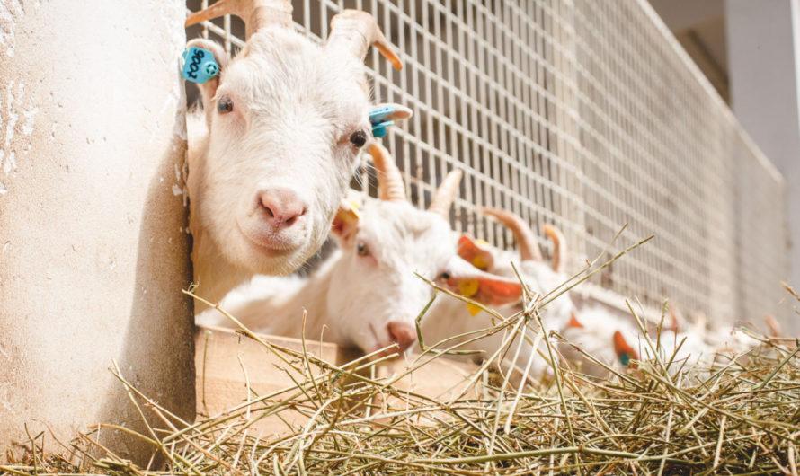 В Чувашии кризис бизнесу не помеха: фермеры продолжают развивать своё дело
