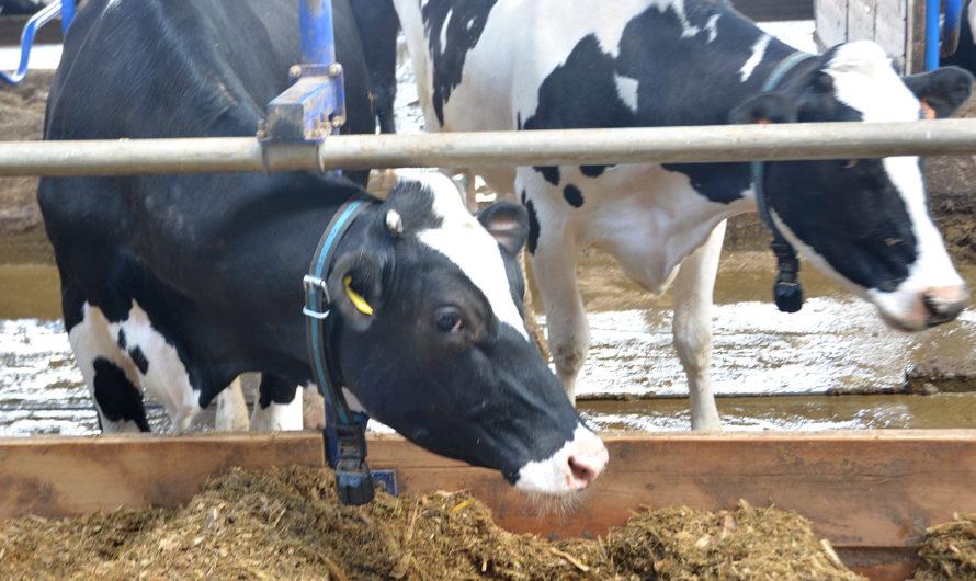 В Чувашии субсидирование сельского хозяйства увеличилось на 500 млн рублей