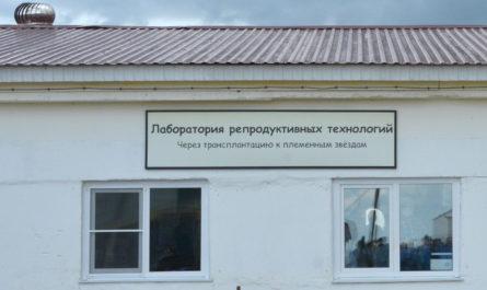 эмбриональный центр в чувашии