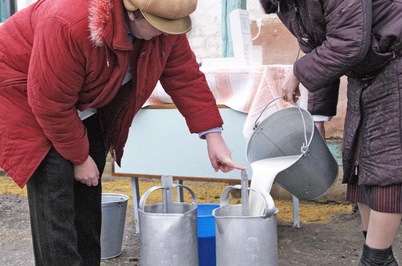 Олег Николаев нашел деньги на поддержку личных подсобных молочных хозяйств