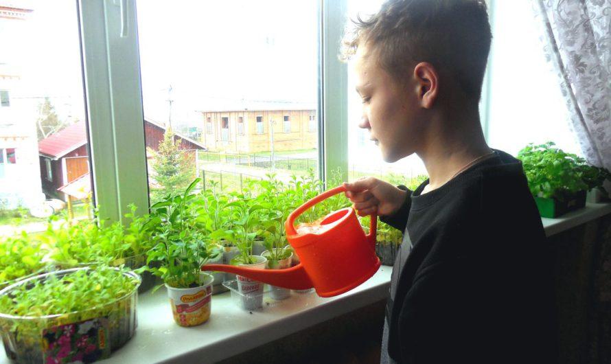Дети-сироты в Чувашии могут жить летом в семье