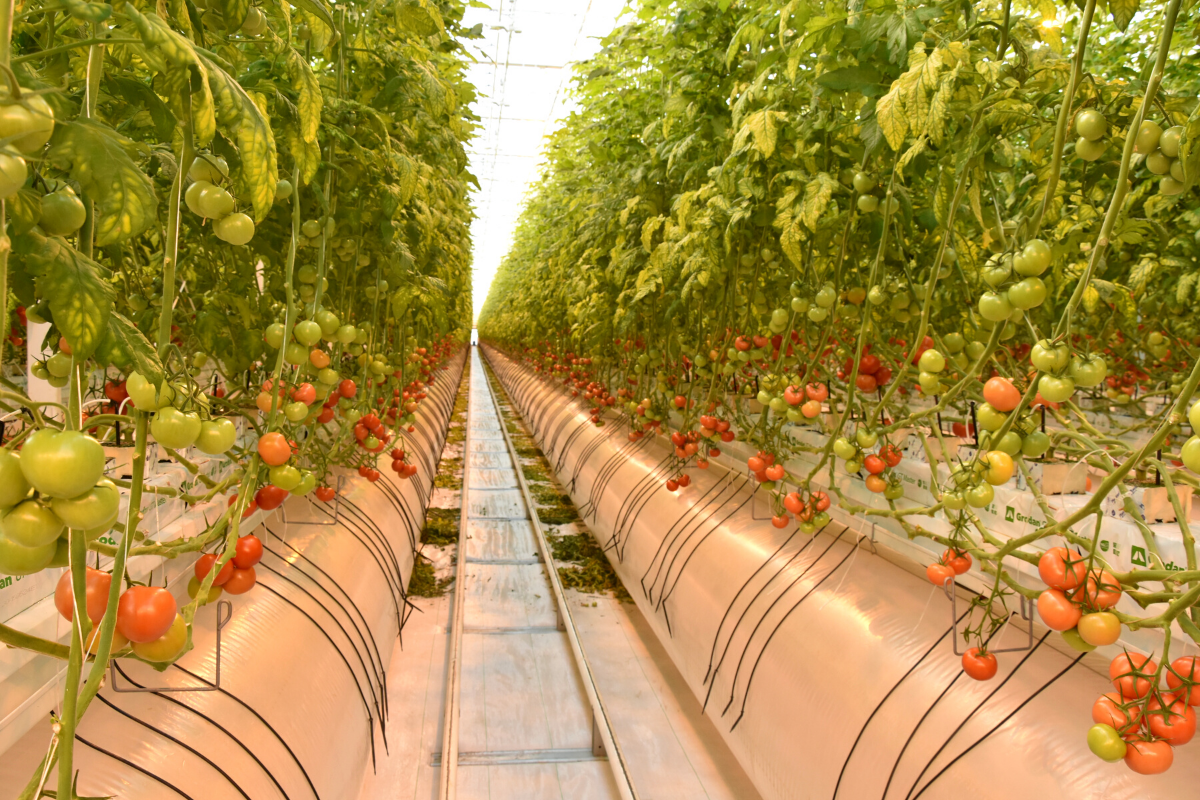 Агроэкспорт Чувашии к 2025 году достигнет 46 миллионов долларов