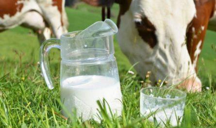 Чувашия увеличивает средний надой молока и продолжает поддерживать владельцев коров