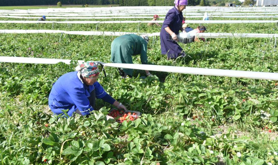 Год за три: Минсельхоз России оценил региональные меры поддержки сельского хозяйства в Чувашии