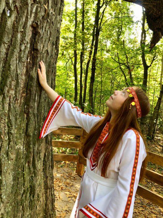 Чувашия продолжает голосовать: теперь выбираем российское дерево года