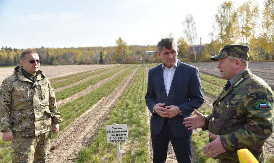 Саженцы для лесов в Чувашии начнут выращивать в специальных теплицах