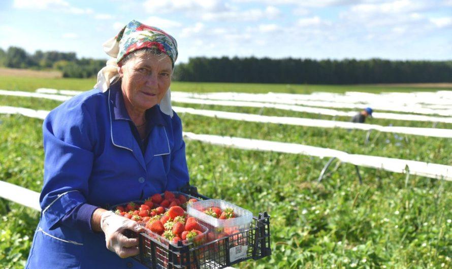 Грантовую поддержку получили 458 фермеров Чувашии