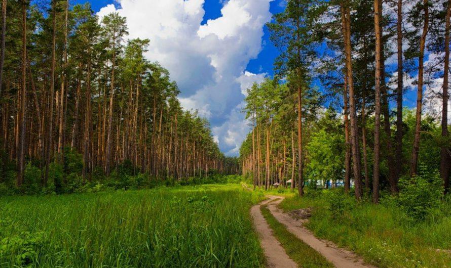 В Чувашии восстановление и разведение посадок на землях лесного фонда выполнено на 101%