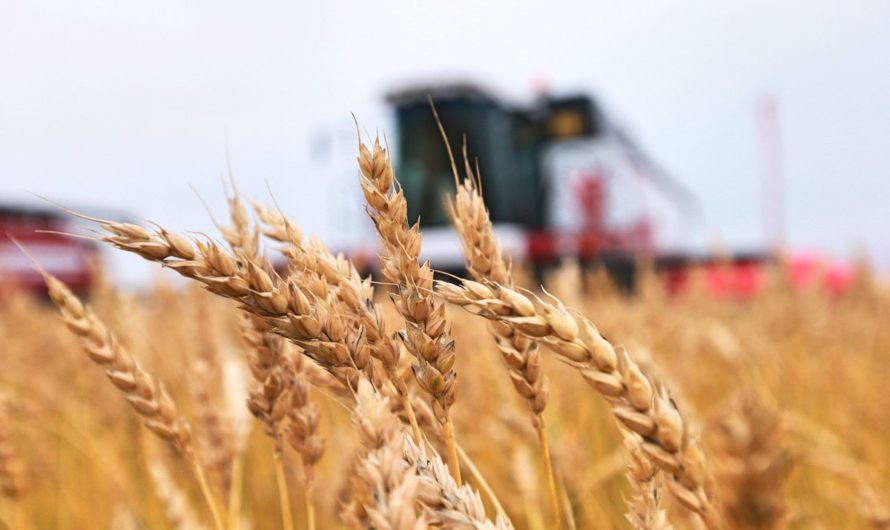 Чувашия и Беларусь наращивают сотрудничество в сельском хозяйстве