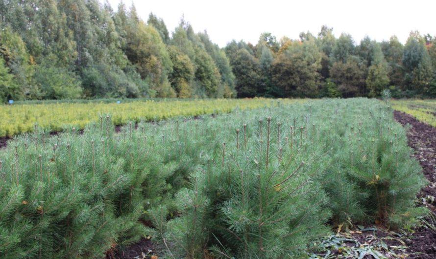 В рамках нацпроекта «Экология» лесовосстановление и лесоразведение выполнено на 101%