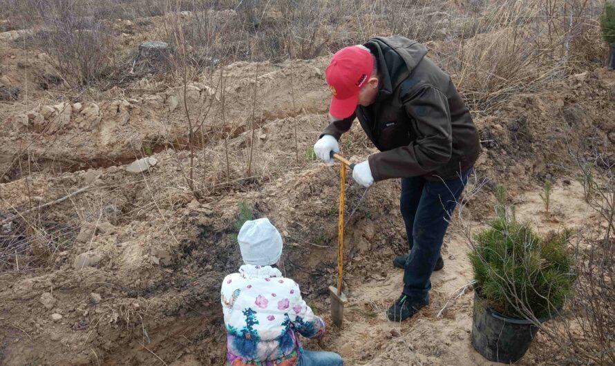 Олег Николаев принял участие в акции «Сад памяти» и рассказал, сколько деревьев посадил