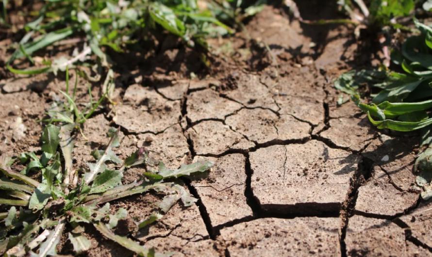 В Чувашии ввели режим чрезвычайной ситуации из-за почвенной засухи
