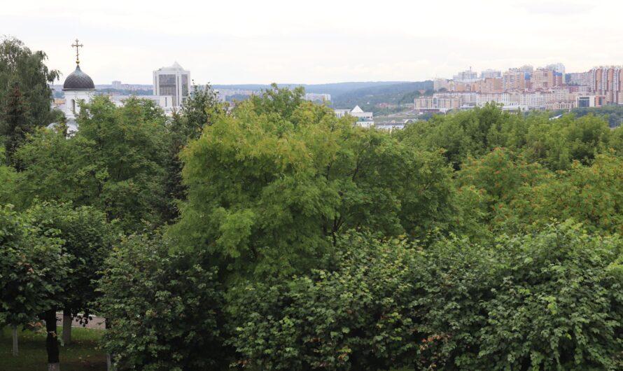 В Чувашии стало больше леса