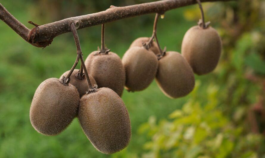 В подворьях Чувашии выращивают шелковицу и киви